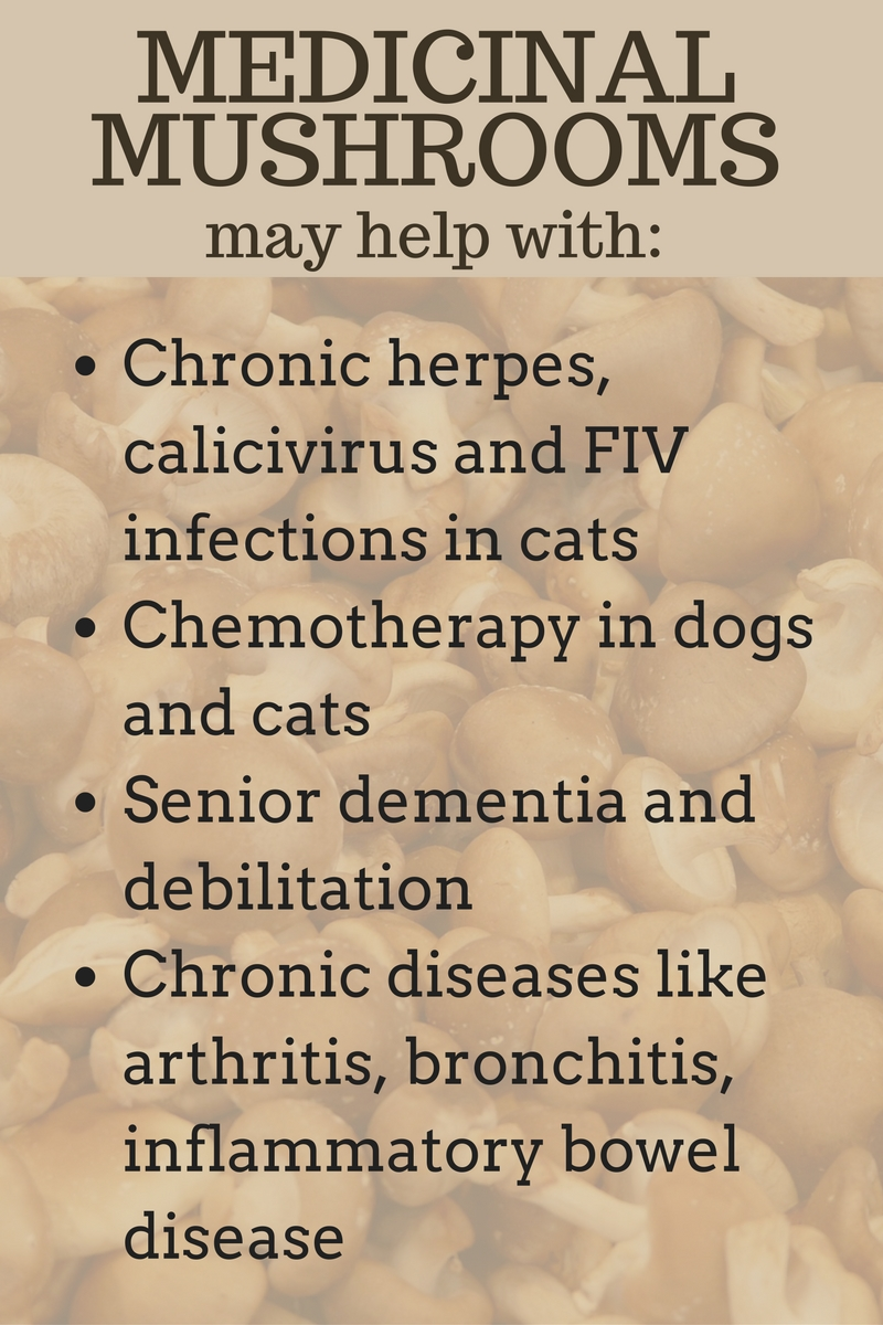 medicinal mushrooms benefits for pets