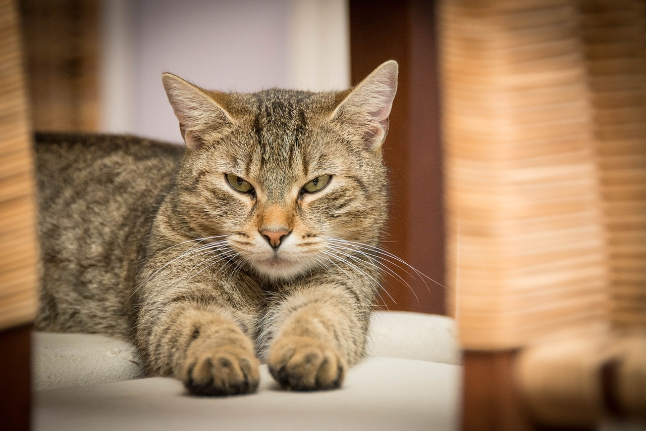 how to detect cancer in cats