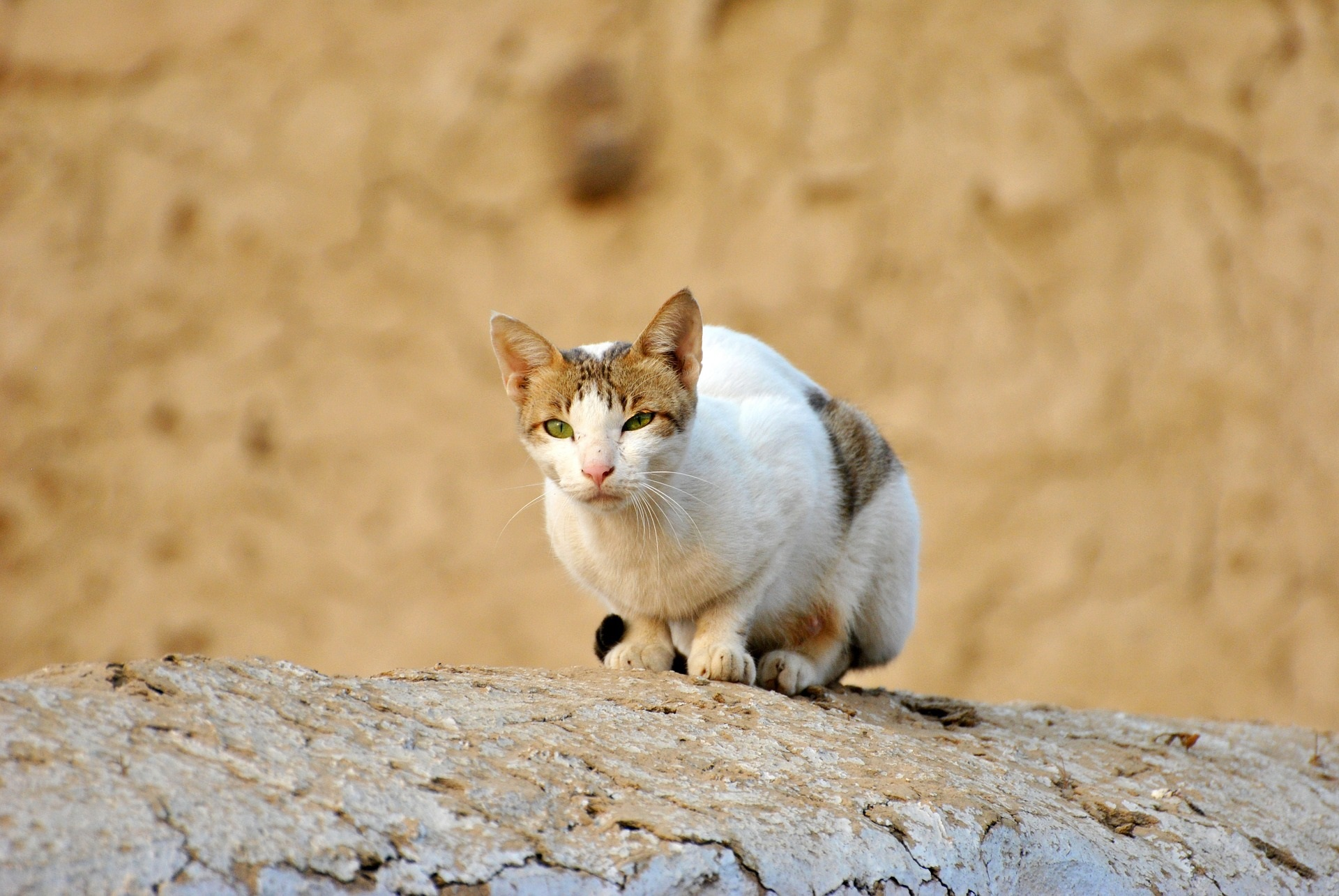 cat cancer causes and symptoms