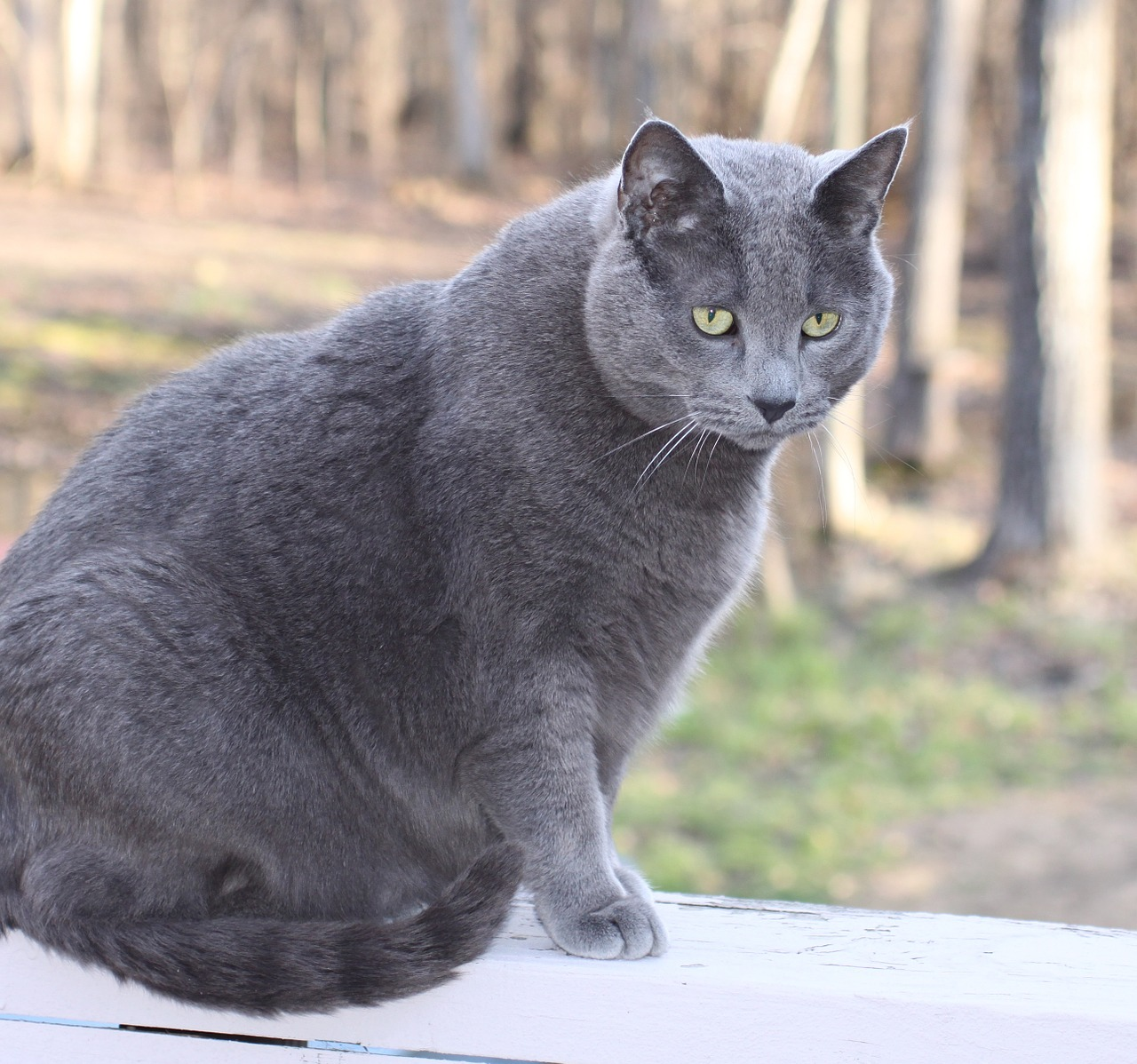 Cat Obesity How to Help Your Cat Lose Weight