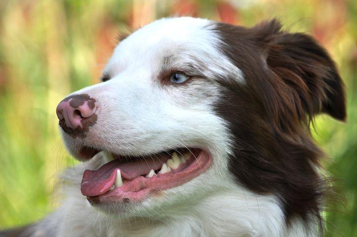 dog dental costs