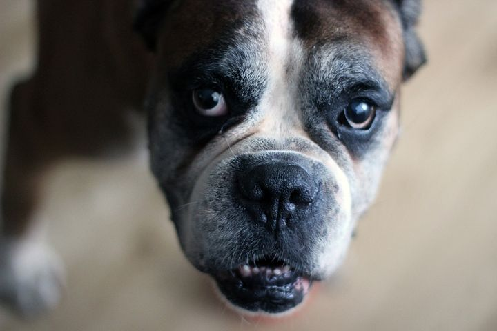 common age related pet health issues