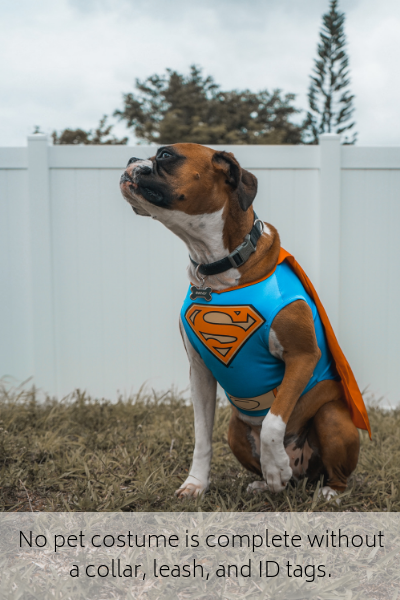 No pet costume is complete without a collar, leash, and ID tags.