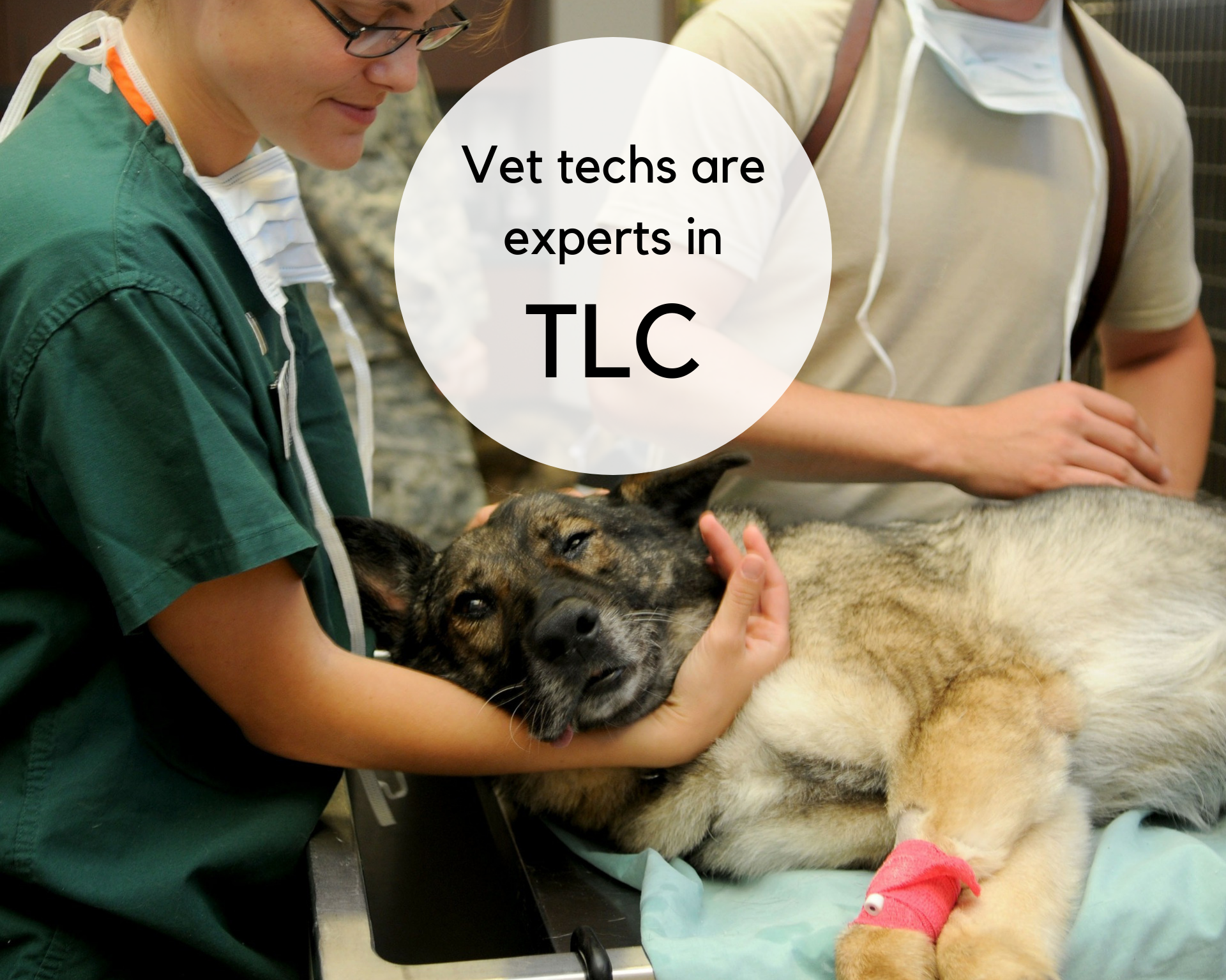 Veterinary technicians are experts in TLC, and they take the responsibility of loving your pet seriously.