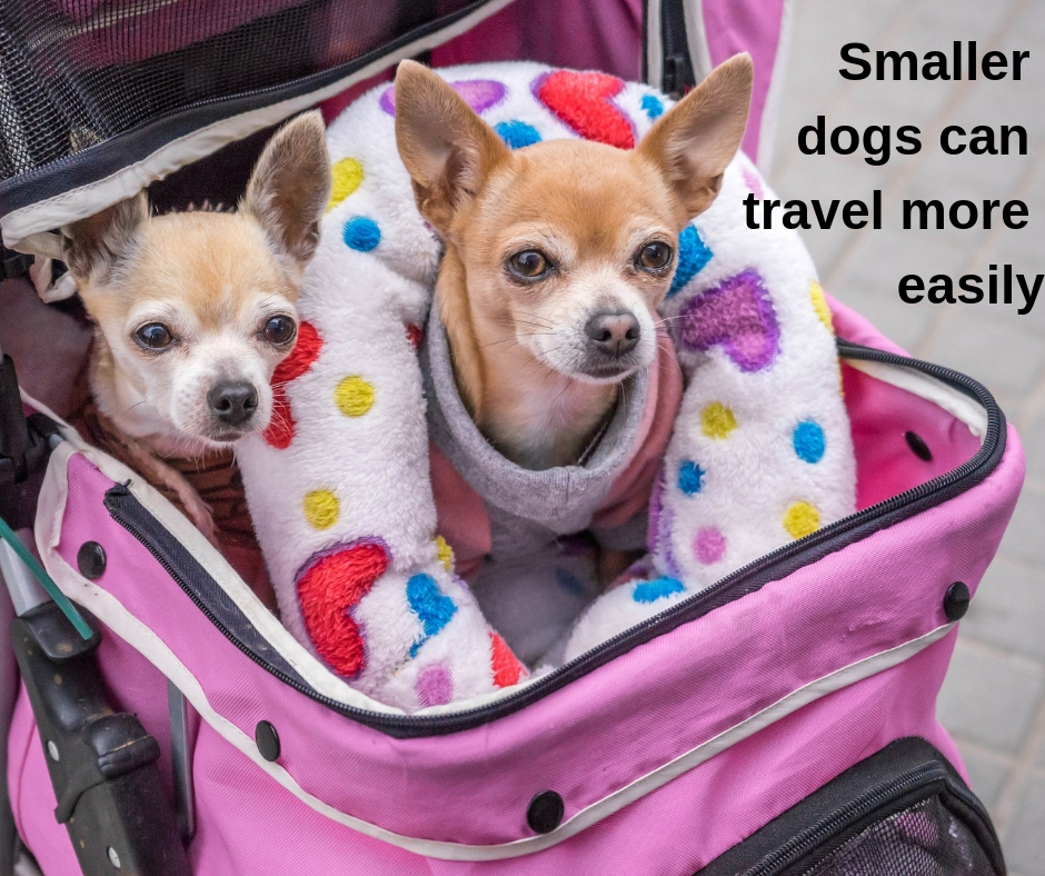 Smaller dogs may travel more easily