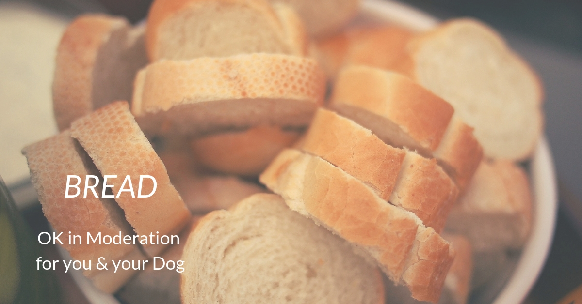 Bread: OK in Moderation for your and your Dog