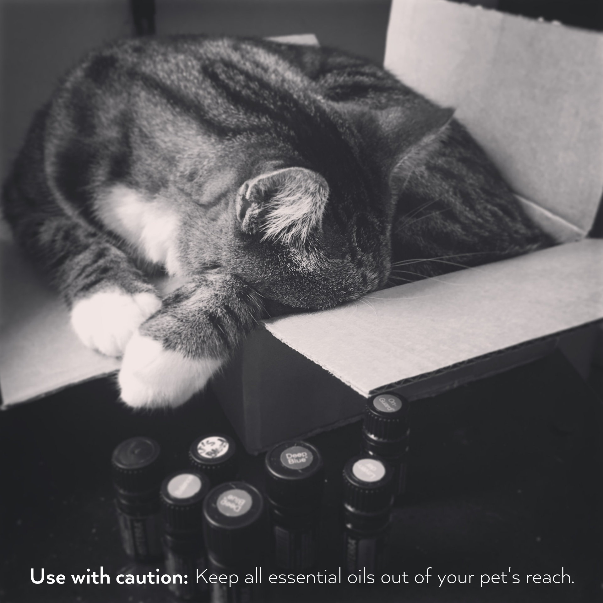 Keep all essential oils out of your pet's reach.