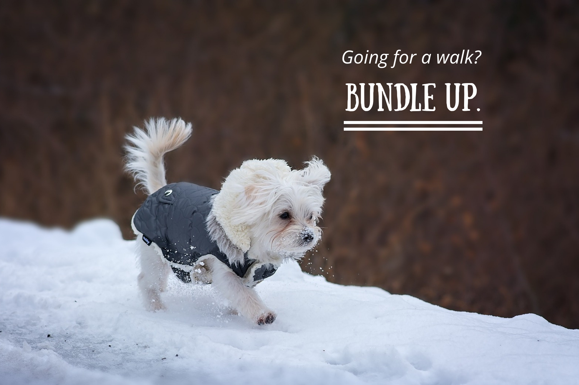 Going for a walk? Bundle up.