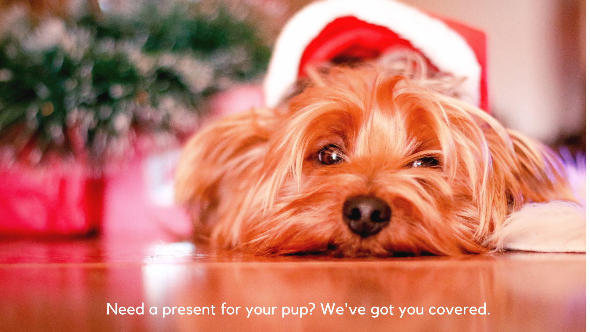 Need a present for your pup? We've got you covered.