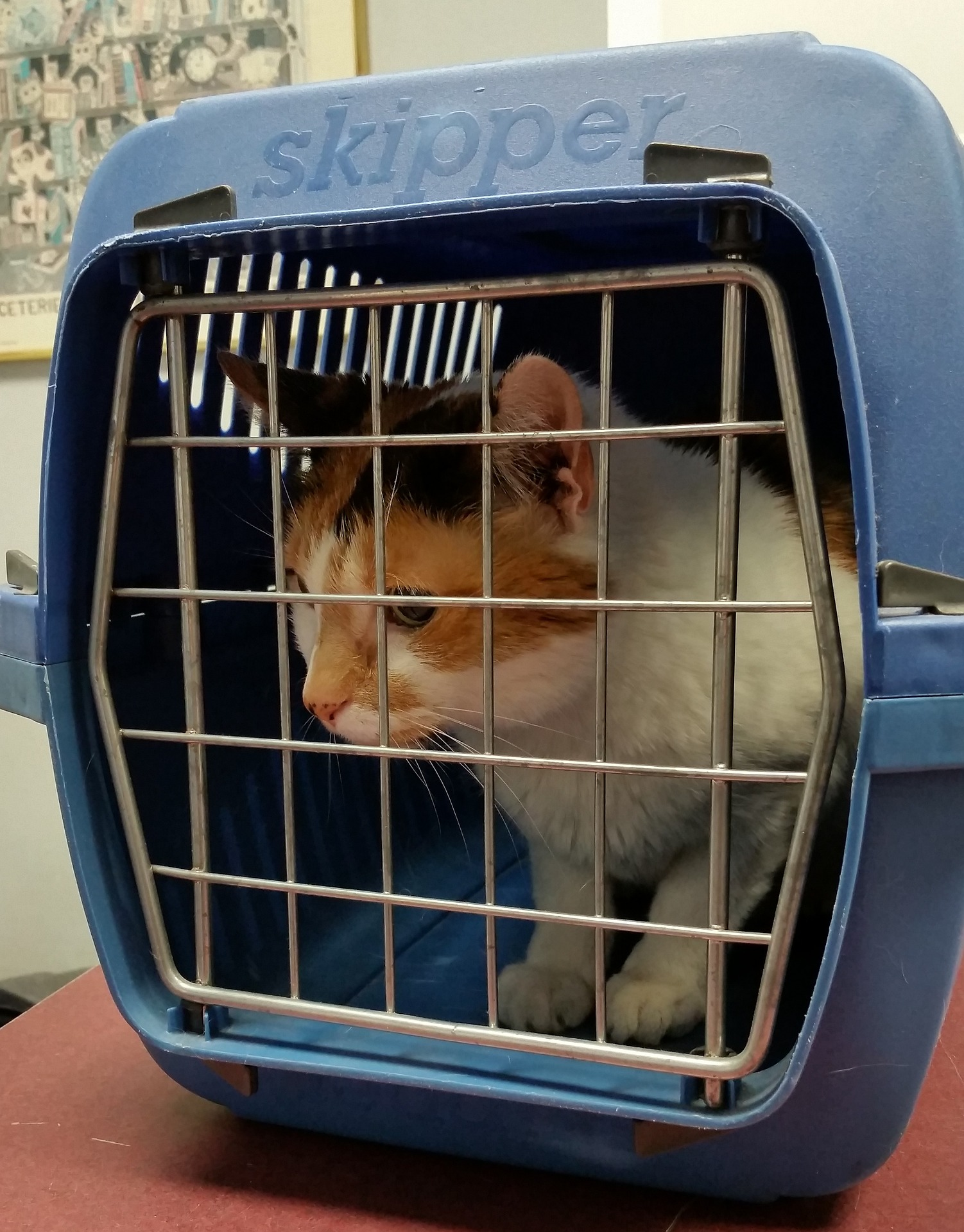 Can your pet fly in a cabin-friendly carrier?