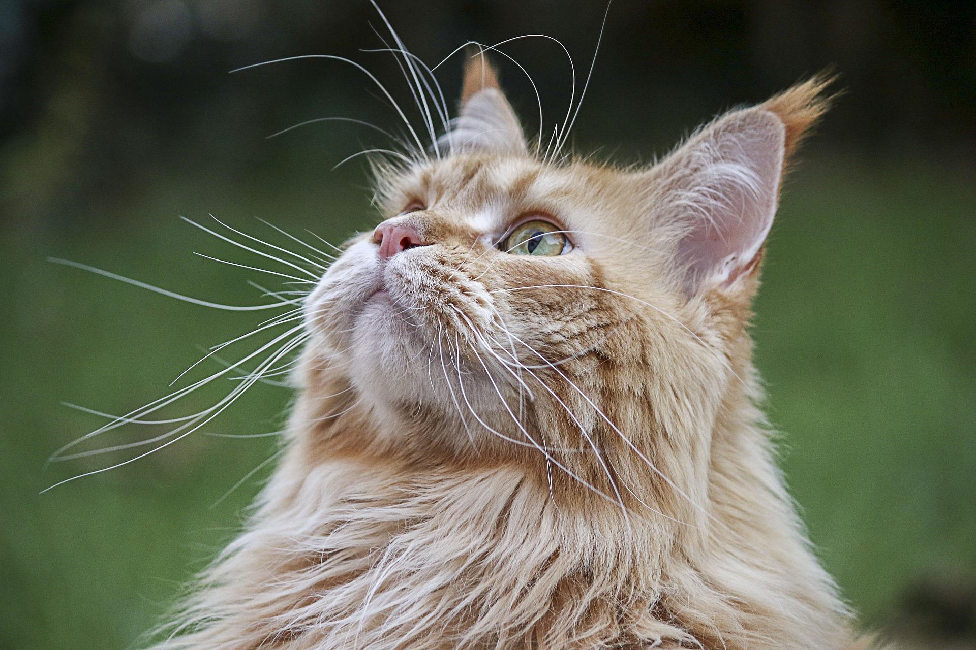 Healthy senior cats are happy senior cats