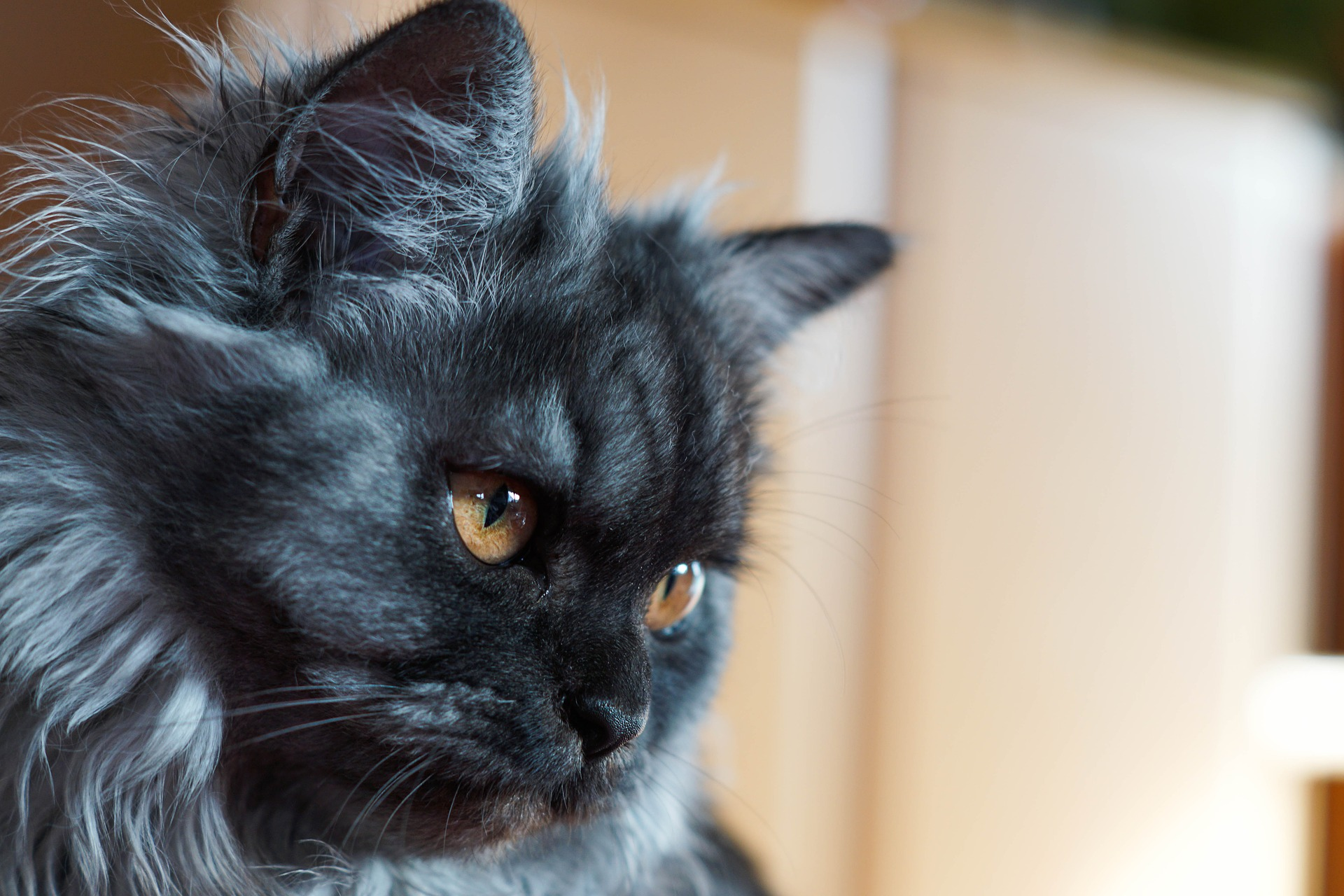 Help your older cat rest comfortably