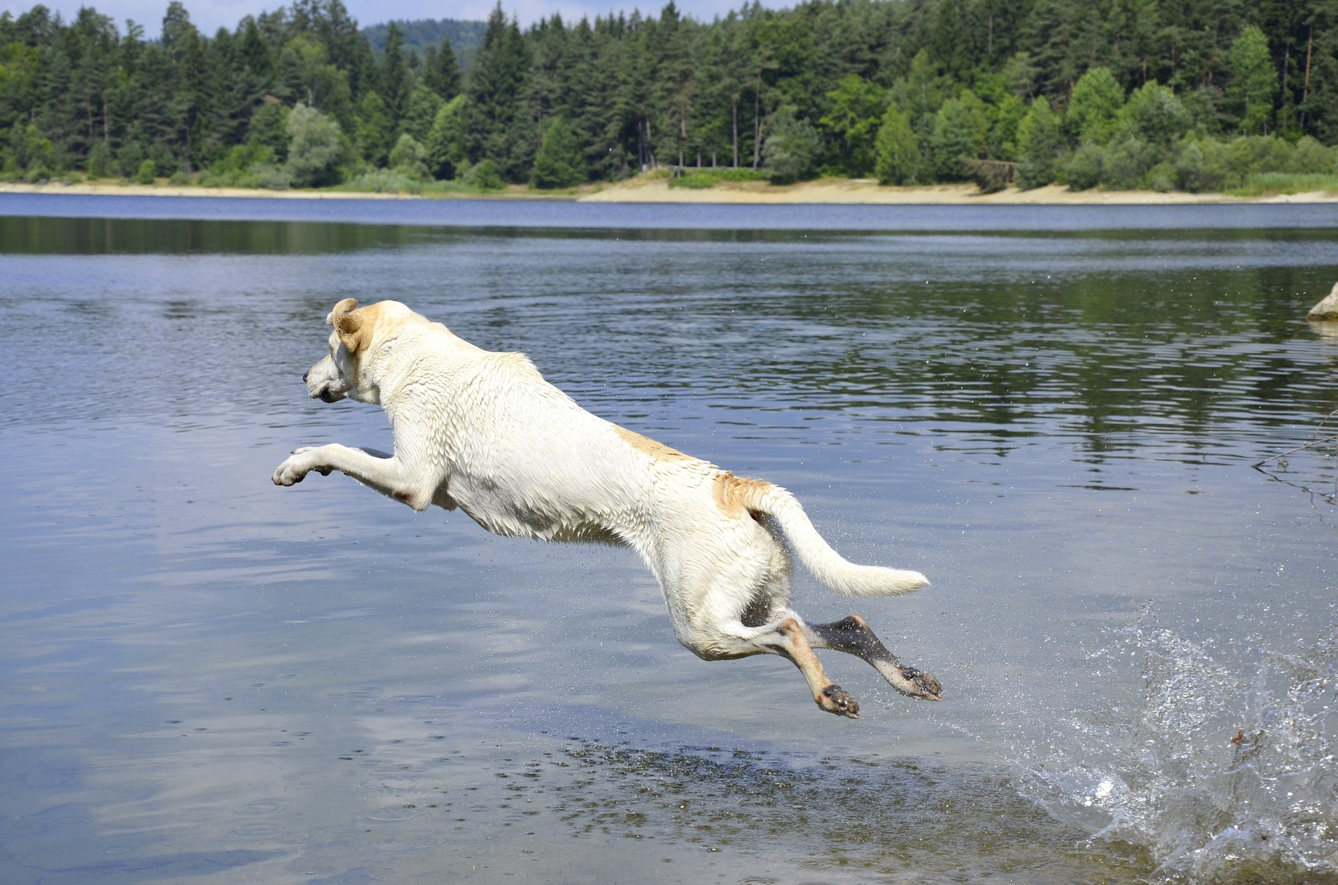 Dock diving should be all about fun for your dog!