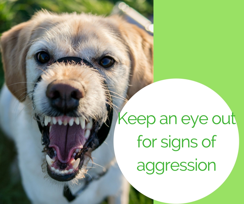 Watch closely for signs of aggression at the dog park