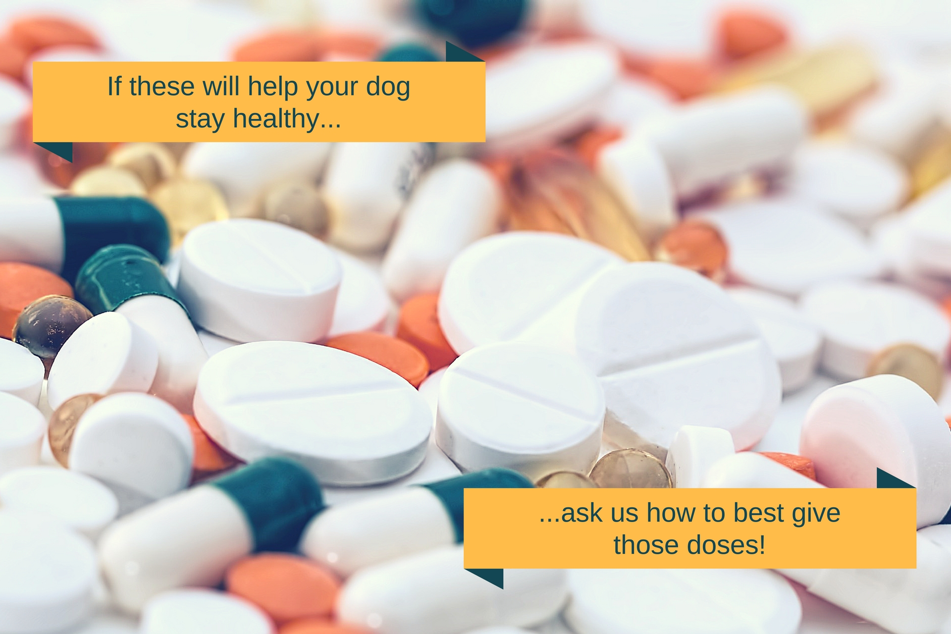 We want your dog to stay healthy, so feel free to ask us if you need help giving that medicine!