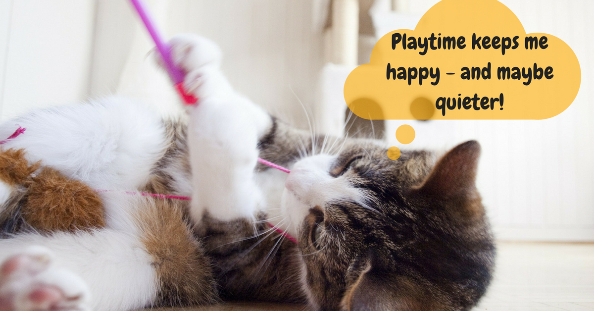 Playtime can keep kitties happier and quieter