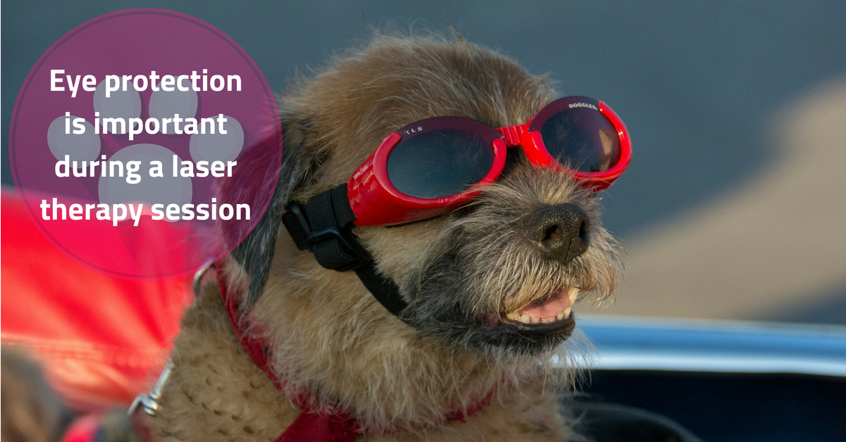 Everyone's eyes should be protected during laser therapy
