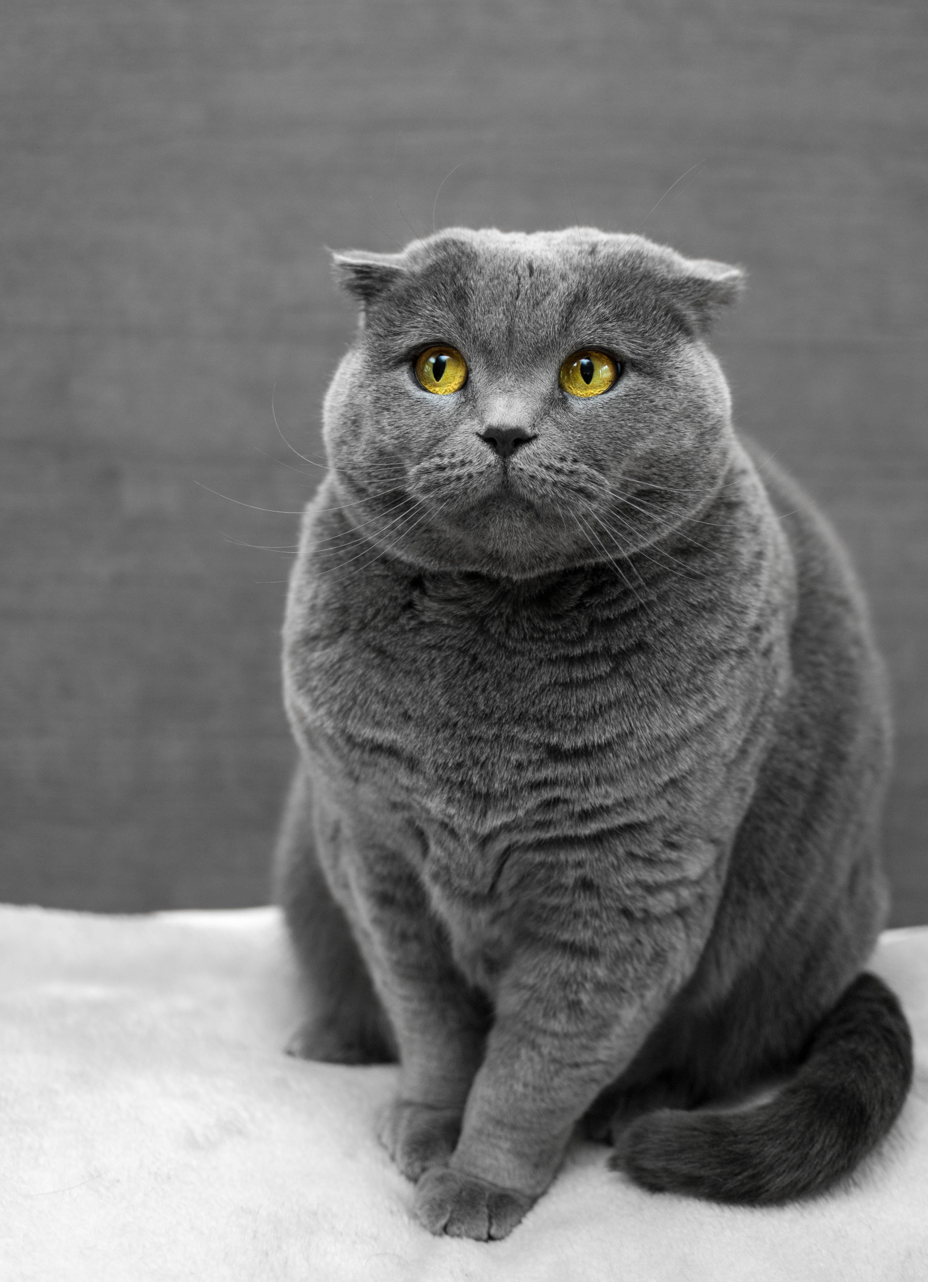 Most cats with FLUTD will have blood in the urine and discomfort while urinating.