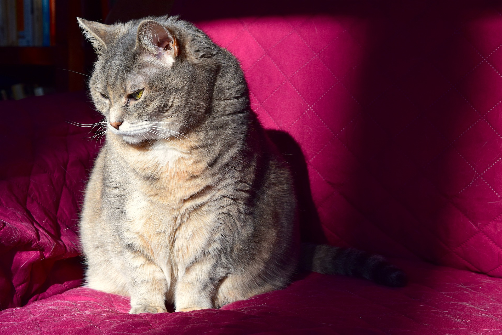 Photo of cat who may be showing subtle signs of pain