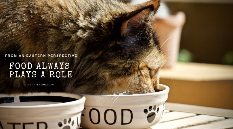 Photo of cat eating food