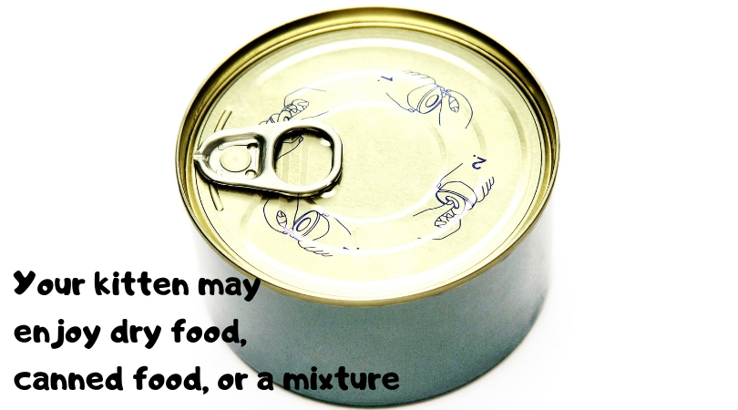 Photo of a can of cat food