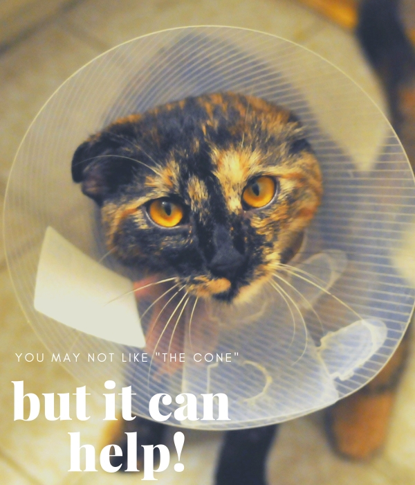 Photo of cat wearing an Elizabethan cone collar