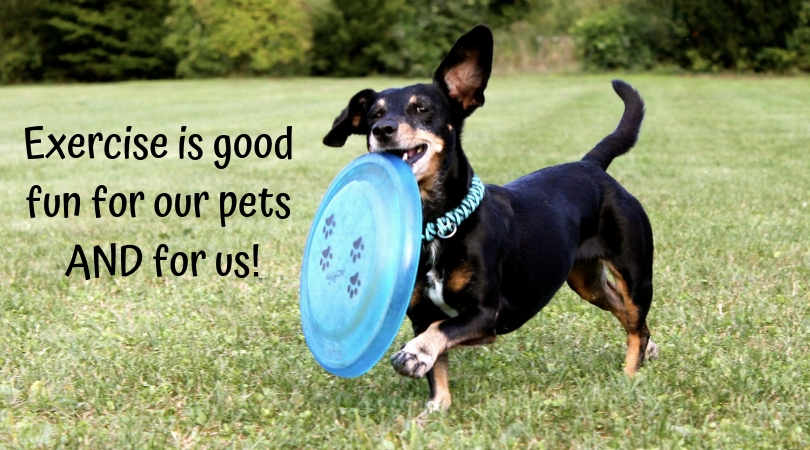 Photo of a dog with a Frisbee