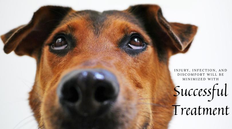 Healthy dog eyes