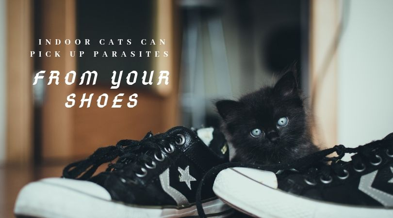 Kitten playing near a pair of shoes