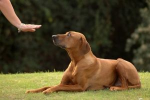 helping deaf dogs cope