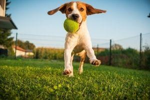 dog ball for holidays