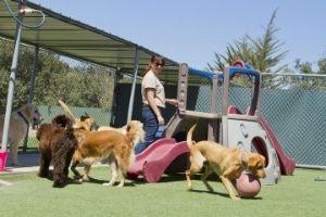 dog boarding exercise