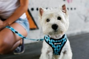 how to choose dog harness