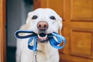 dog walks during quarantine