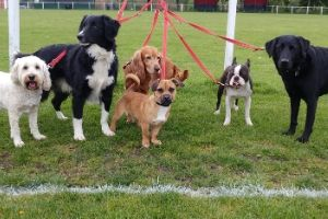 doggie daycare helps separation anxiety in dogs