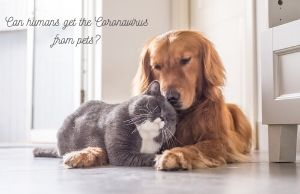 dogs cats coronavirus