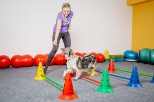 indoor obstacle course for dogs