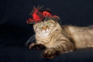 wealthiest cat