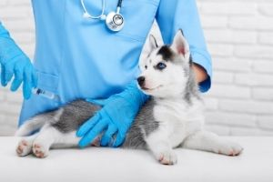 itchy dog treatments