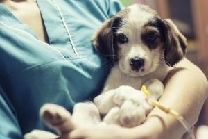 prevention of parvovirus in puppies
