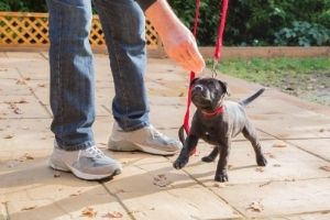 positive reinforcement puppy training