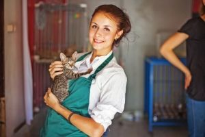 dogs and cats in shelters are clean