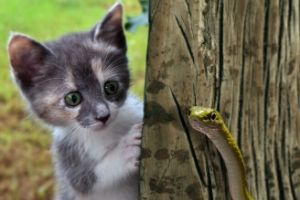 keep cats safe from snake bites