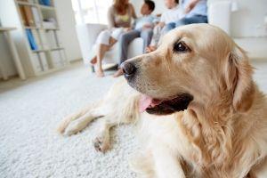 stay home pets coronavirus