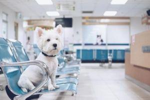 veterinary dog boarding