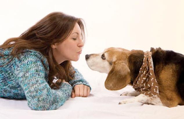 Basset Hound Dog Breed Info