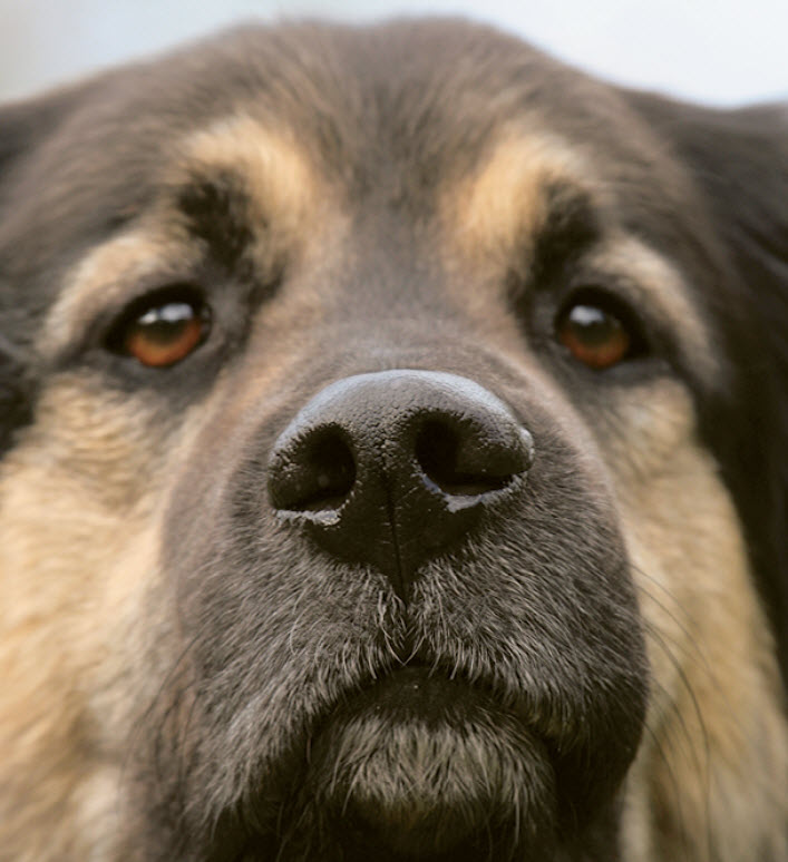 Knowing When To Breed Your Dog