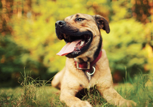 Large Mixed Breed Dog Breed Info