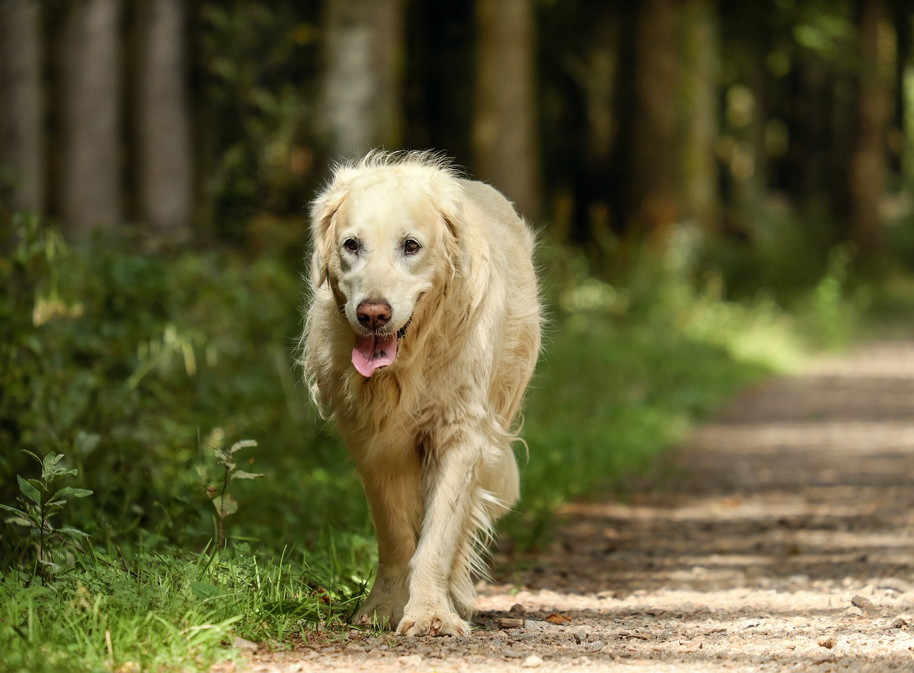 senior pet health month