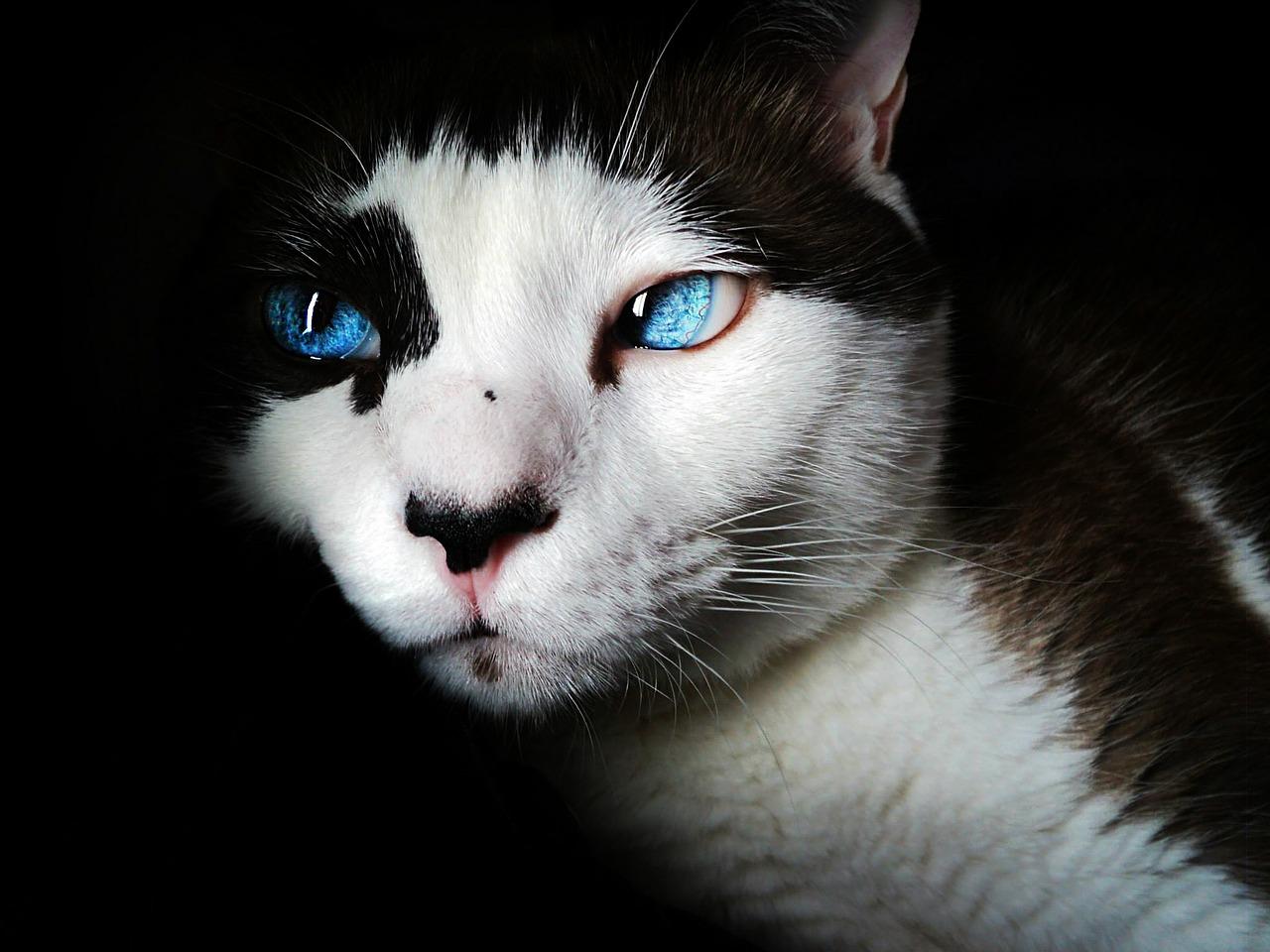 senior cat pain